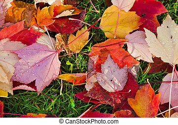 autumn leaves, op, de, groene, grass.
