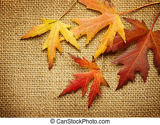 Autumn Leaves over Burlap background