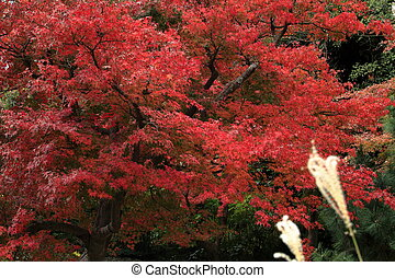 autumn leaves (red)