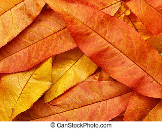 Red, yellow and orange autumn leaves - natural, organic background.