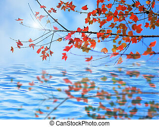 autumn leaves reflecting in the water