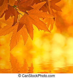 autumn leaves, reflecting in water, very shallow focus