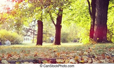 Autumn Leaves Selective Focus. Lens Flare Effect in...
