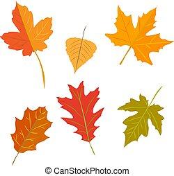 autumn leaves set, isolated on white background