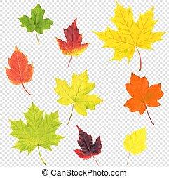 Autumn Leaves Set Isolated Transparent Background