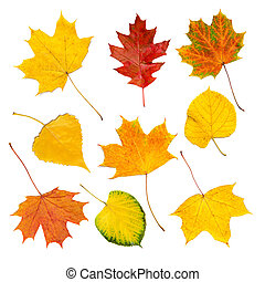 Autumn leaves set - Set (collection) from many colorful dry ...