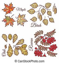 Autumn leaves set with Rowan, maple, birch and oak