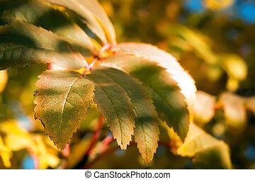 autumn leaves, shallow focus