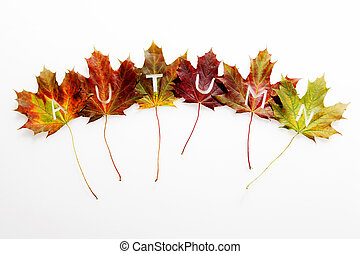 Autumn leaves still-life with text