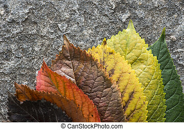 Autumn leaves on a road. Multicolor