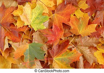 Autumn Leaves - Leaves in a park.