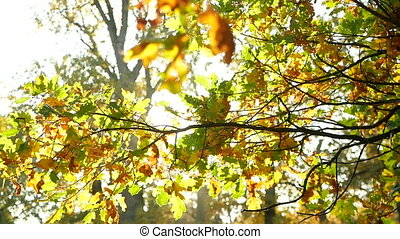 Autumn leaves sun branch