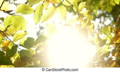 Autumn leaves sunlight - Golden autumn leaves closeup...