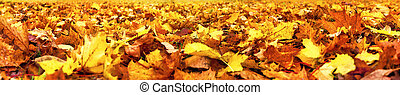 Autumn leaves, super wide banner - Autumn leaves lying on...