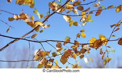 Autumn leaves swaying in the wind