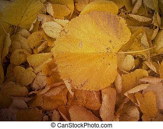 Autumn leaves texture