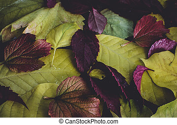 autumn leaves texture