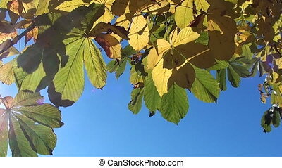 autumn leaves top border