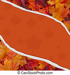 Autumn Leaves Torn Background for your message or invitation
