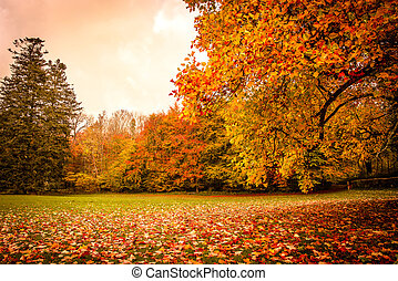 Autumn leaves under a tree in the park
