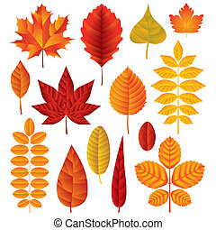 Autumn leaves vector set - Vector collection of bright...