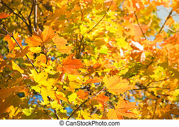Autumn leaves , very shallow focus.