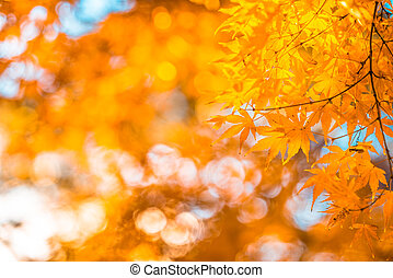 autumn leaves, very shallow focus