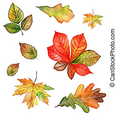 Autumn leaves watercolor set on white background