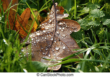 autumn leaves with drops of morning dew