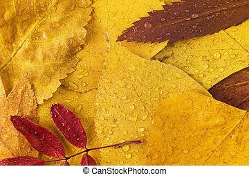 autumn leaves with drops