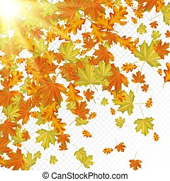 Autumn leaves with sun rays.