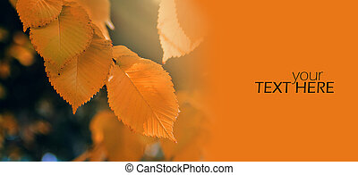 Autumn leaves with the copy space