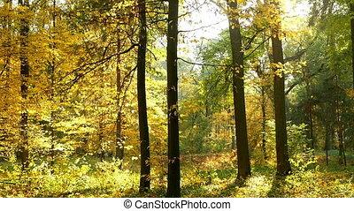 Autumn leaves wood sun
