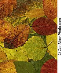 Autumn leaves XXL file