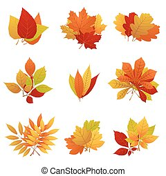 Autumn leaves yellow foliage vector set