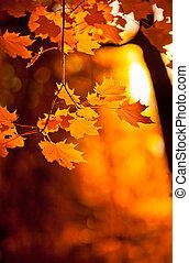 autumn leaves, zeer, ondiepe focus