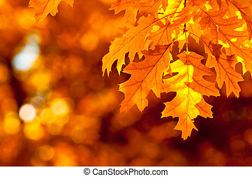 autumn leaves, zeer, ondiepe focus