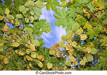 autumn leaves, zwevend, in, de, hemel