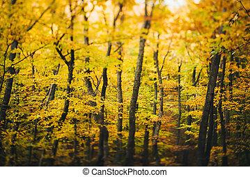 autumn les, kopyto