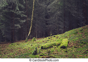 autumn les, poleno, mech, clearing, pokrytý