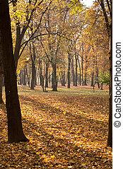 autumn les, sluneční paprsky