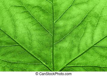 autumn., levél növényen, juharfa