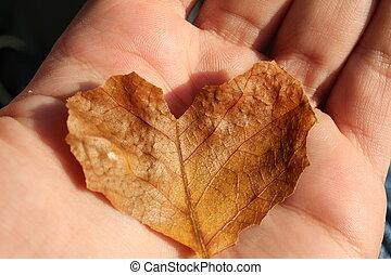 autumn liść, serce