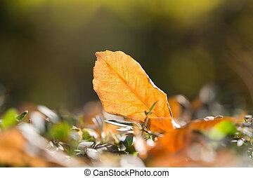 autumn liść, w, natura