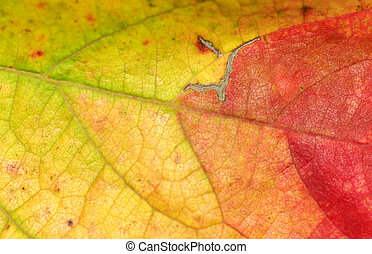 Autumn macro leaf.