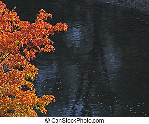 Autumn Maple against Black Water