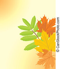 Autumn maple and ash leaves