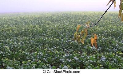 autumn maple branch and mist