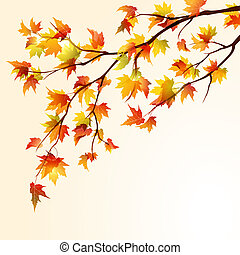 Autumn maple branch - Autumn maple tree branche on bright ...