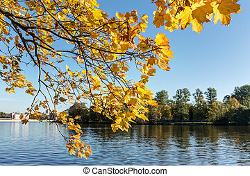 branch with yellow leaves over the river